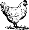 Invoice Chicken Image